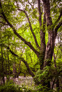 Swamp Tree Royalty Free Stock Photo