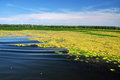 Swamp vegetation in the danube delta vibrant Stock Photography