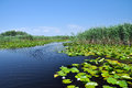 Swamp vegetation in the danube delta vibrant Stock Photo