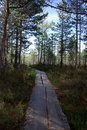 Swamp Viru  in Estonia.The nature of Estonia. Royalty Free Stock Photo