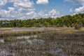 Swampland in north carolina view of swamp and grasses from cedar point tideland trail near swansboro nc Stock Images