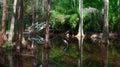 Swampland in South Carolina Royalty Free Stock Photo