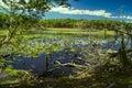 Swamps on navarino marshland island in southern chile Stock Photos