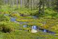 Swampy forest river in northern finland Stock Images