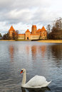 Swan on the background of the Trakai castle Stock Photo