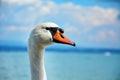Swan on the beach Royalty Free Stock Photo