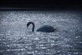Swan Crossing Blue Lake