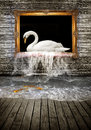 Swan in golden frame Royalty Free Stock Photo