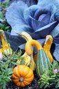 Swan gourd squash for autumn harvest decoration in the garden Stock Photography