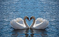 Swan heart Royalty Free Stock Photo