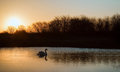 Swan on lake during colorful Winter sunrise Royalty Free Stock Photo