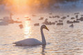 Swan lake fog winter sunset Royalty Free Stock Photo