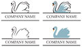 Swan Logo Royalty Free Stock Photo