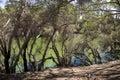 Swan River hidding behind trees view in Maali Bridge Park, Swan Royalty Free Stock Photo