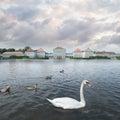 Swan on a Romantic Lake Royalty Free Stock Photo