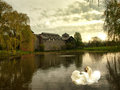 Swan scene peaceful spring evening with two beautiful swans Royalty Free Stock Photos
