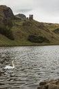 Swan on St. Margaret's Lock, Holyrood Park, Edinburgh Royalty Free Stock Photo