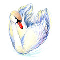 Swan. Swan Watercolor drawing Royalty Free Stock Photo