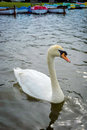 Swans At The Boating Lage In T...