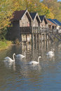 Swans on Lake Ammer Stock Photography