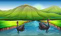 Swans in the river illustration of Royalty Free Stock Images