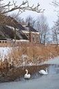 Swans två water white Fotografering för Bildbyråer