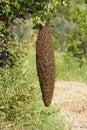 Swarm Stock Images