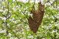 Swarm of bees over the tree in countryside Royalty Free Stock Images