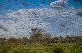 Swarm of locust huge hungry in flight near morondava in madagascar Royalty Free Stock Photos