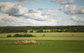 Swedish country side Royalty Free Stock Image