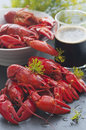 Swedish crayfish freshly cooked served with a cold beer Stock Image