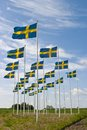 Swedish flag sway in the landscape Stock Image