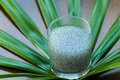 Sweet Basil Seeds Royalty Free Stock Photo