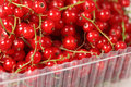Sweet berries red currant Stock Images