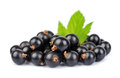 Sweet black currants Royalty Free Stock Image