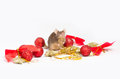 Sweet brown mouse sitting among red and gold Christmas decorations. Royalty Free Stock Photo