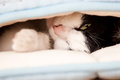 Sweet cat kitten sleeps wrapped in blanket Royalty Free Stock Photos