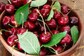 Sweet cherries with leaves Royalty Free Stock Photo