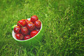 Sweet cherry in a bowl on the grass ripe fruit also known as wild bird or gean Stock Photos
