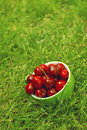 Sweet cherry in a bowl on the grass ripe fruit also known as wild bird or gean Royalty Free Stock Images