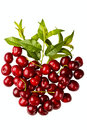 Sweet cherry fruits Royalty Free Stock Images