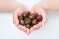 Sweet chestnuts Stock Photography