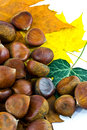Sweet chestnuts Royalty Free Stock Photos