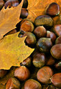Sweet chestnuts Royalty Free Stock Photo
