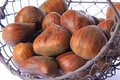 Sweet chestnuts castanea sativa ripe maroons fruits of the chestnut tree Stock Photo