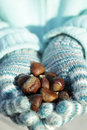 Sweet chestnuts in the hands Stock Images