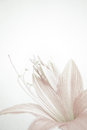 Sweet color petal lily in soft color and blur style on mulberry paper texture Royalty Free Stock Photo