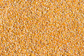 Sweet corn grain kernels Stock Photo