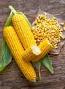 Sweet corn grains with tasty, ripe ears of corn, isolated on old Royalty Free Stock Photo