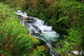 Sweet creek falls oregon the waterfalls on in s coast range tumble through extremely lush and wet temperate rain forest the water Royalty Free Stock Photo